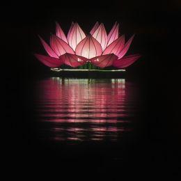 Pink Floating Lotus