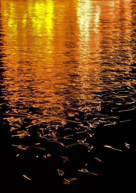 River Night Lights
