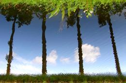 TreeseerT