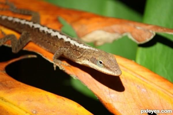 Leafy Lizard