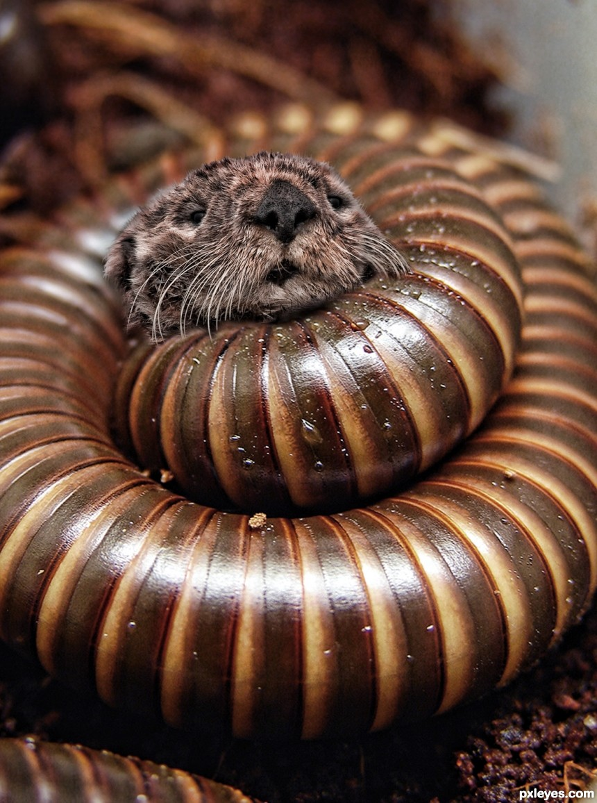 Millipedes  Suck photoshop picture)