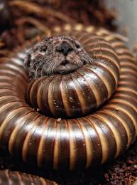 Millipedes  Suck Picture