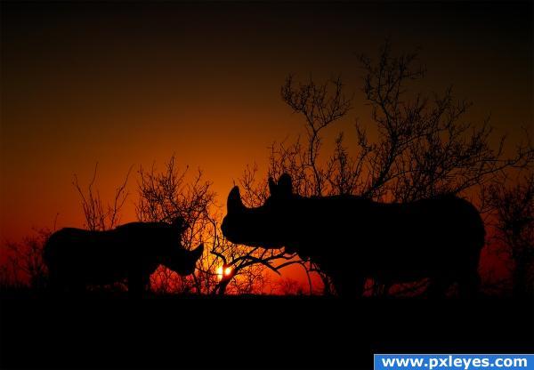 Rhino sunset