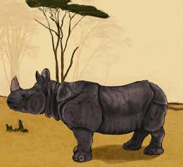 Painted Rhino Picture