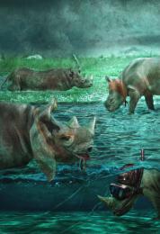 TheMagicWorldOfRhinos