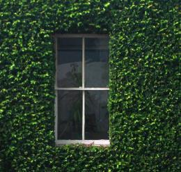 WindowintheVines
