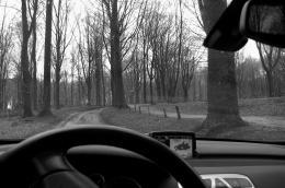 Forestdriving