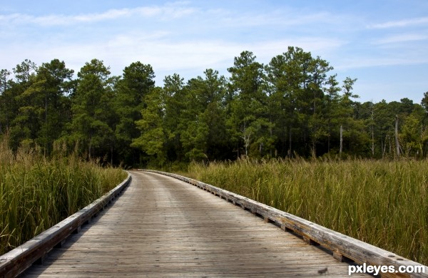 Road thru Marsh