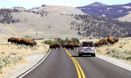 BuffaloRoad