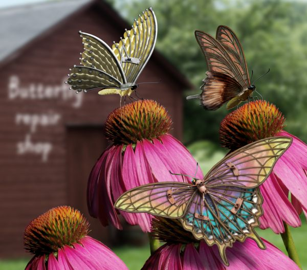 Butterfly Repair photoshop picture