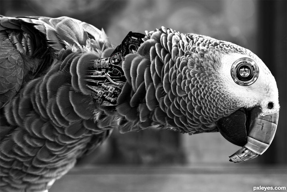 Stirk Polly