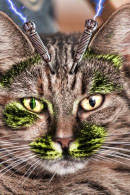 Kitty Beep