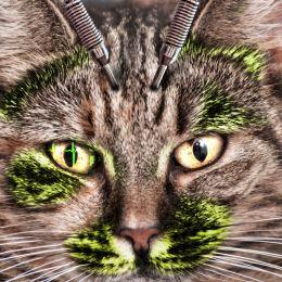 KittyBeep