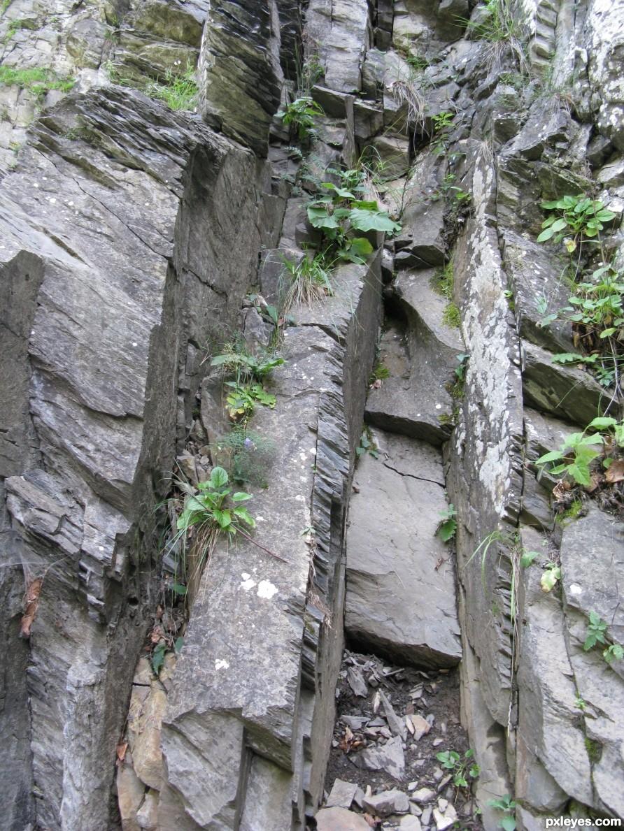 Life among the rocks