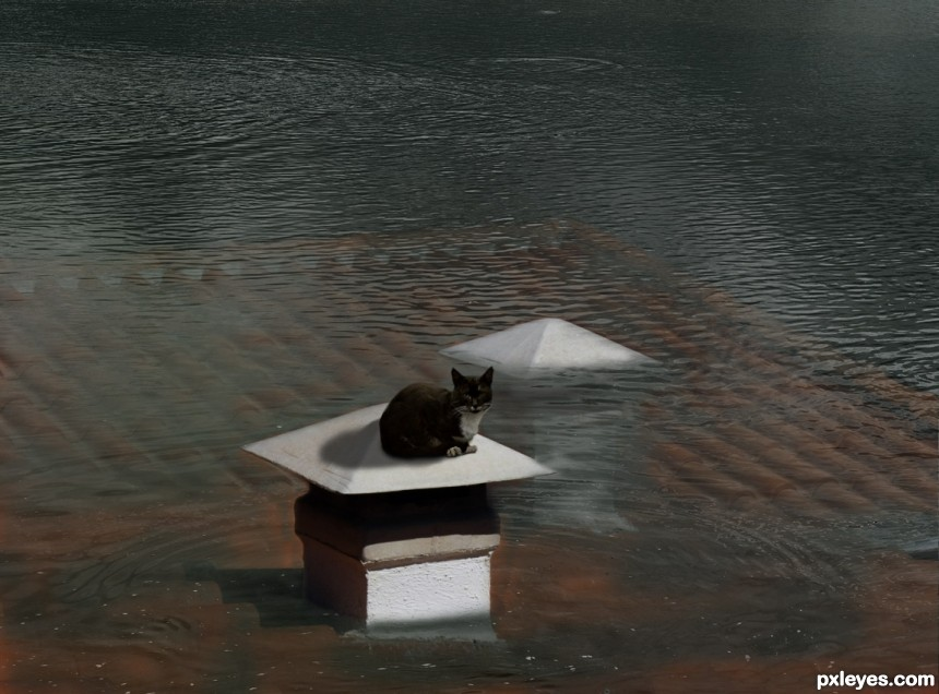 Cat On A Flooded Roof photoshop picture)