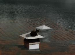 Cat On A Flooded Roof