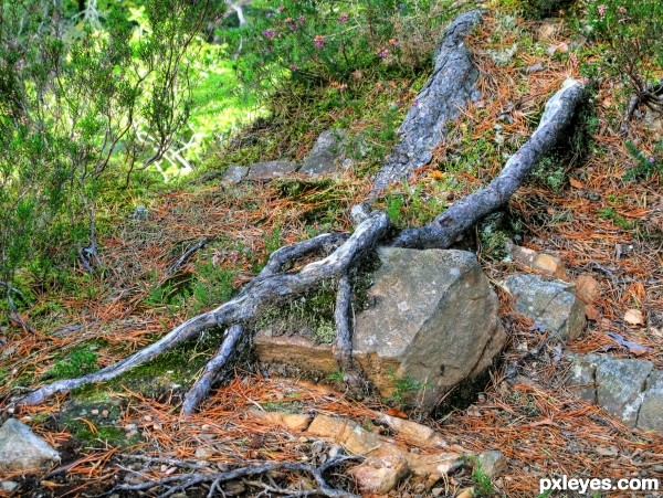 Roots & Rocks