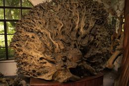 NineDragonRootSculpture
