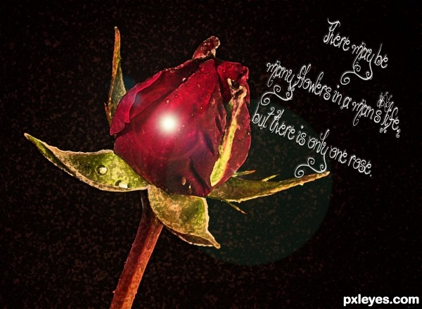 Only One Rose