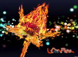 roseonfire