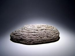 My pet rock.