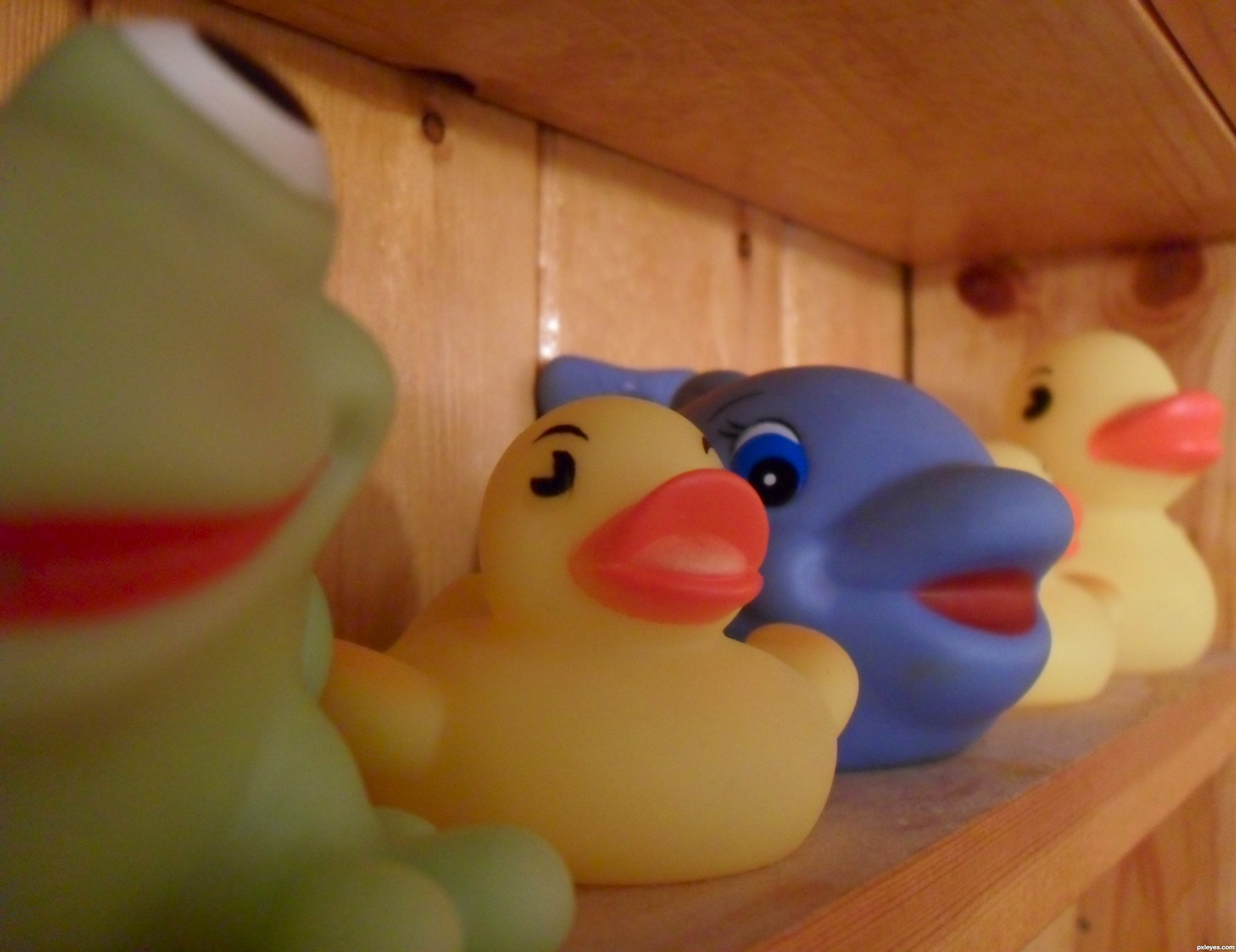 You\'re The One picture, by k5683 for: rubber ducks photography ...