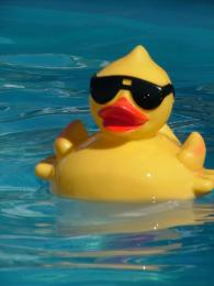 Cool Duckie