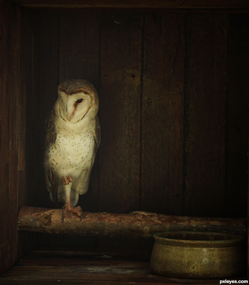 Ode to the Barn Owl