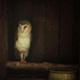 Ode to the Barn Owl Picture