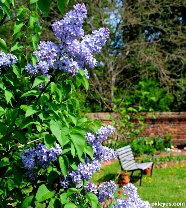 Through the Lilacs