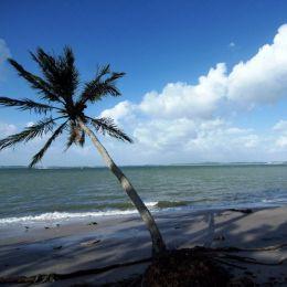 CoconutPalm