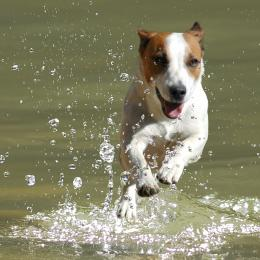 Running on water Picture