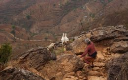 Goatkeeper of Nepal Picture