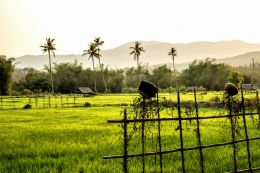 Rice Field and Cooking Pots