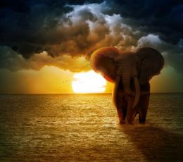 The Elephant Picture