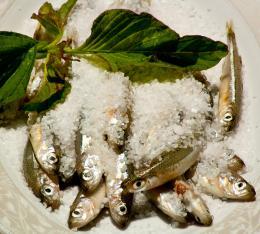 smallfishes