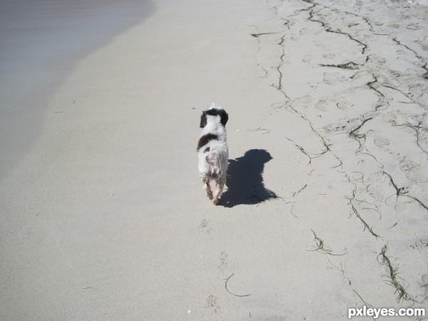 Dog on Sandy Beach