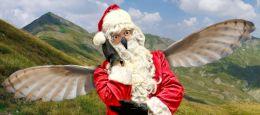 Owl Santa