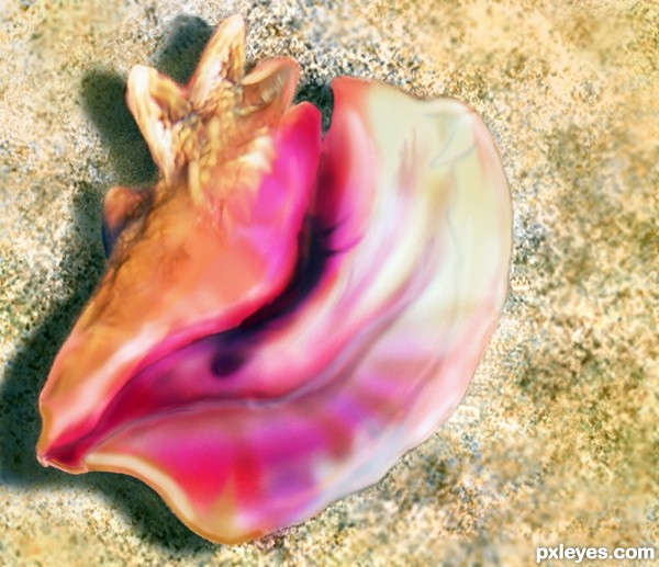 Sweet Conch