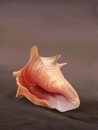 The lonely Conch...