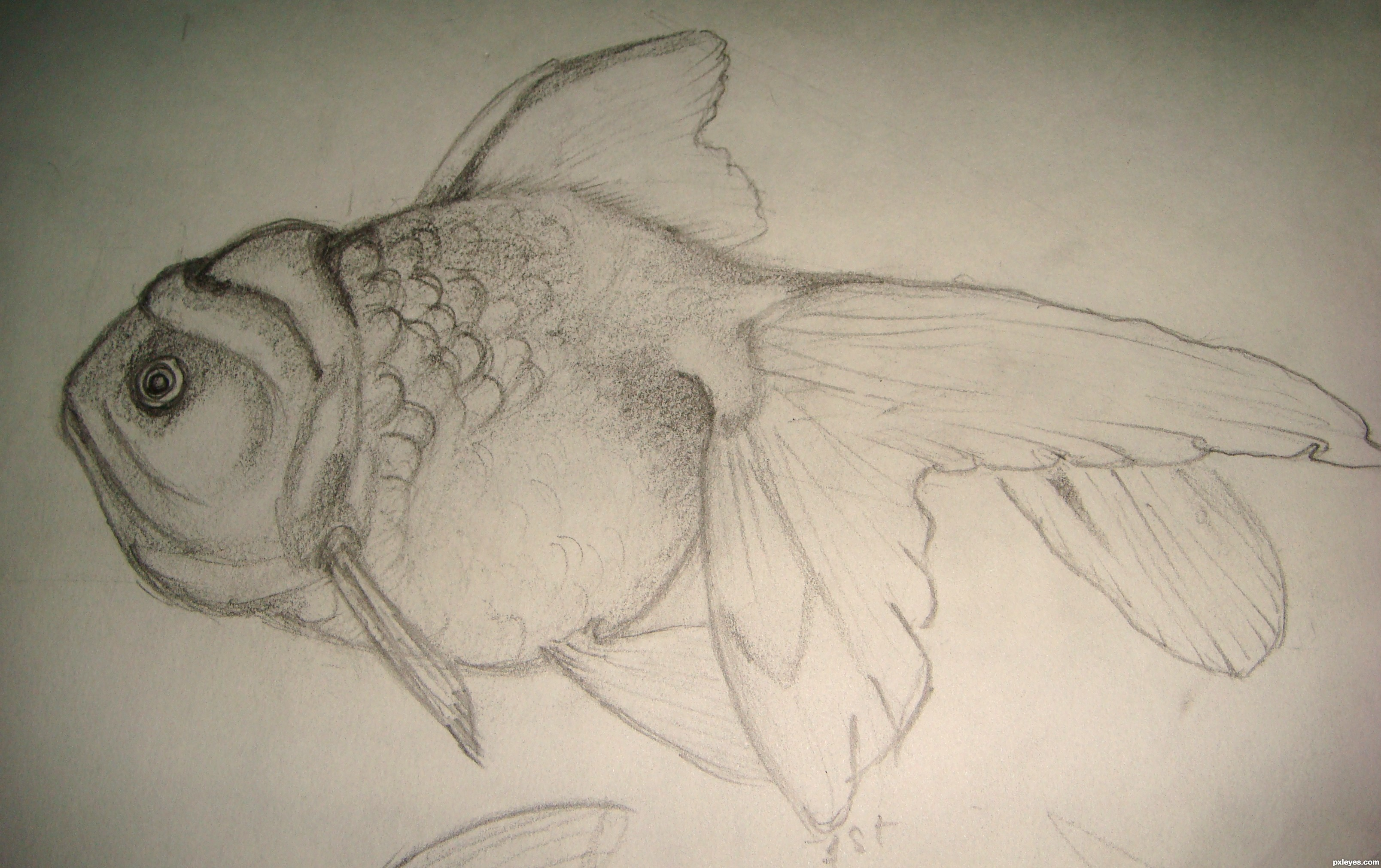 How To Draw Realistic Sea Animals
