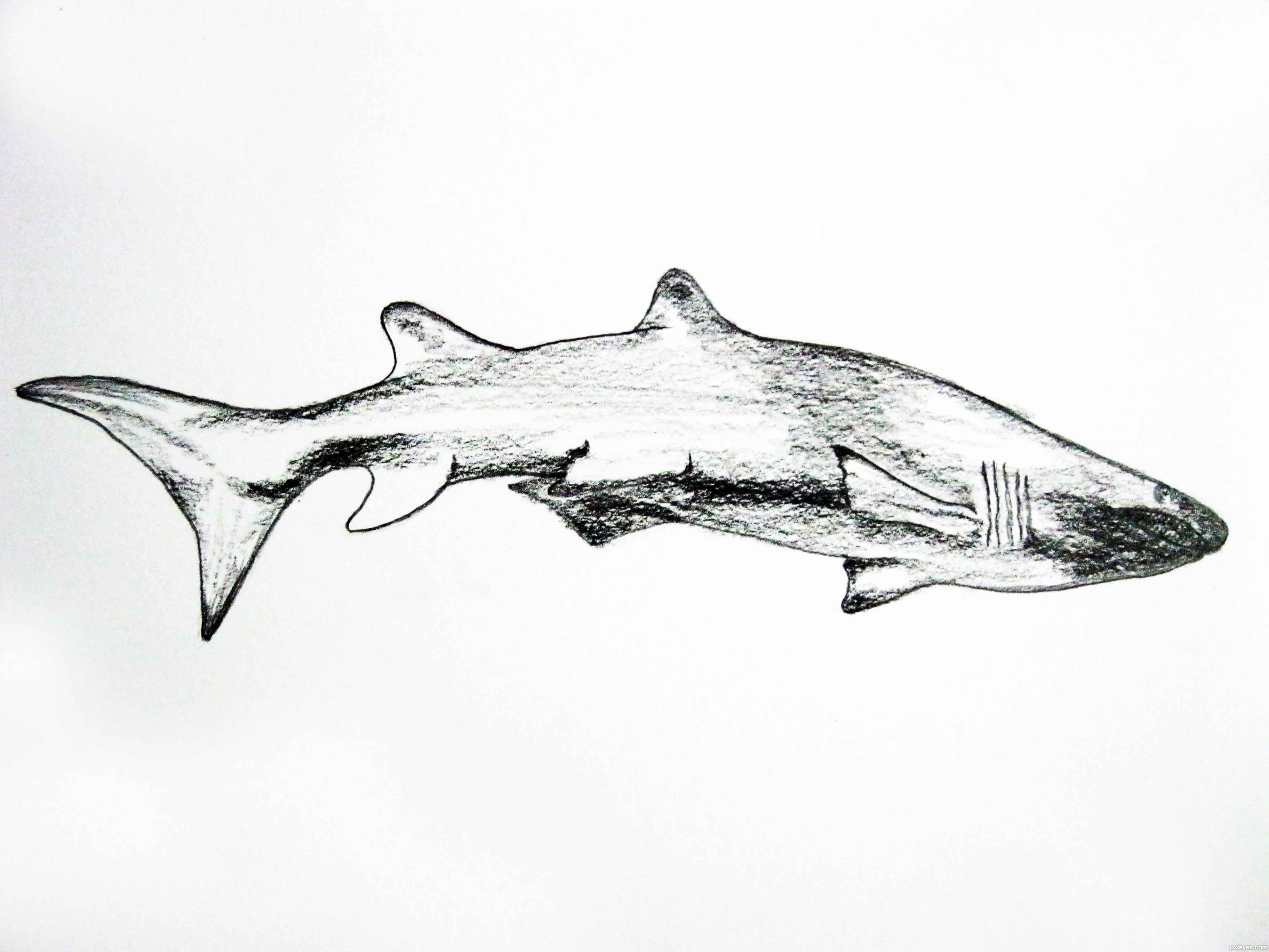 Realistic Shark Drawings Shark