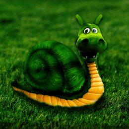 greendragonsnail