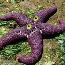 StarfishSquishMonster