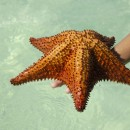 sea star source image