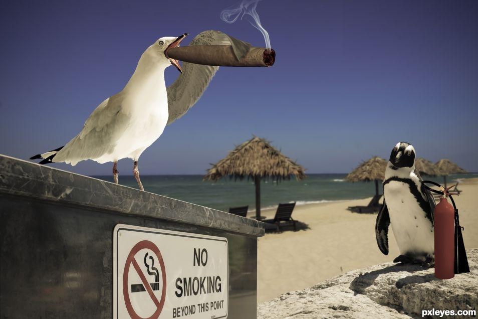 Seagull Seagar