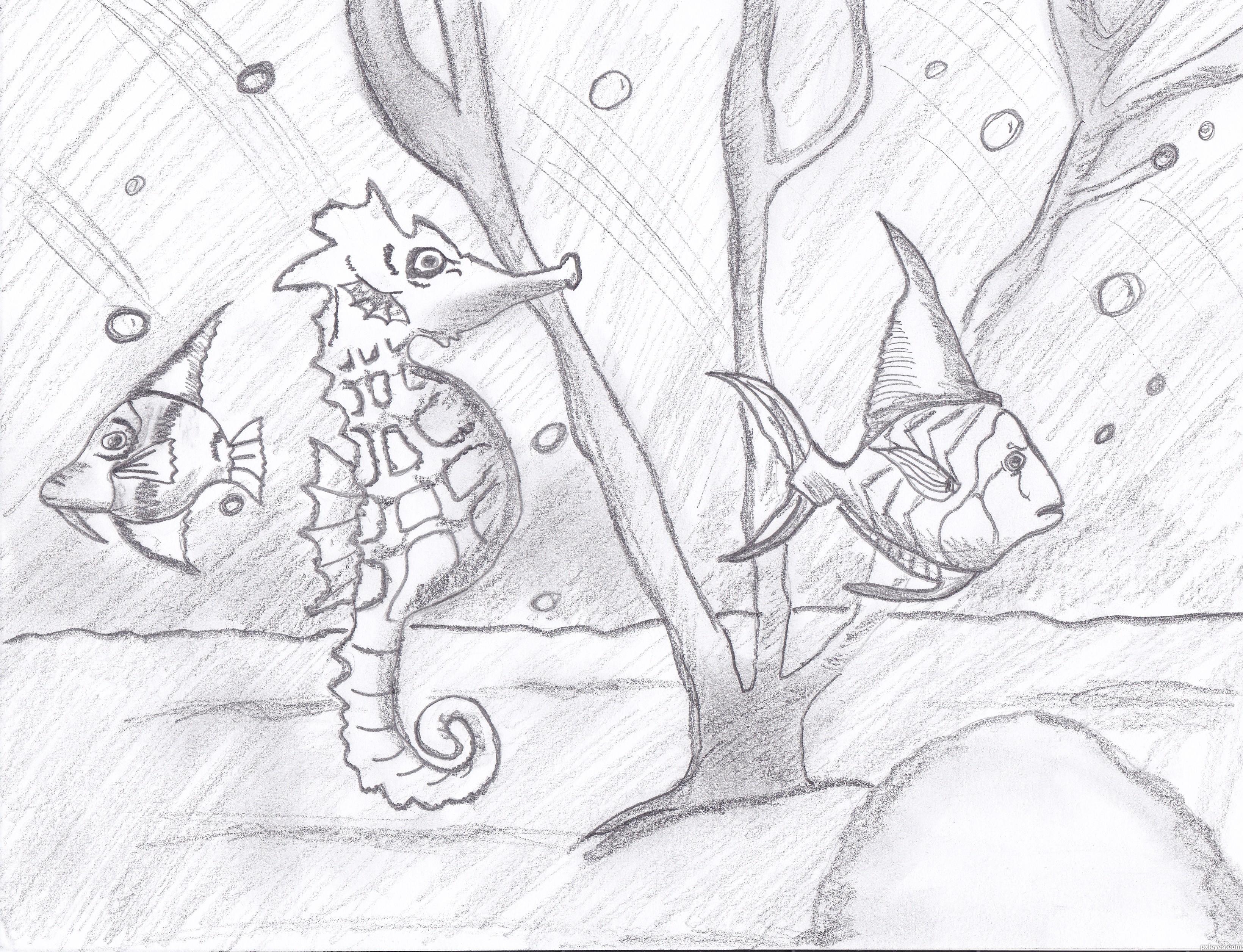 Cool Seahorses Drawing Seahorses