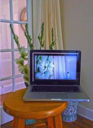 Windowtostillart