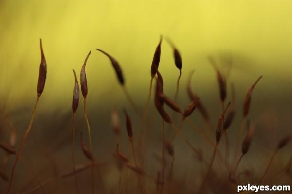 Moss seeds at sunset
