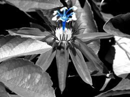 BlueStamen